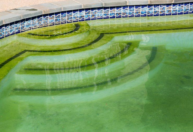 mustard algae in pool